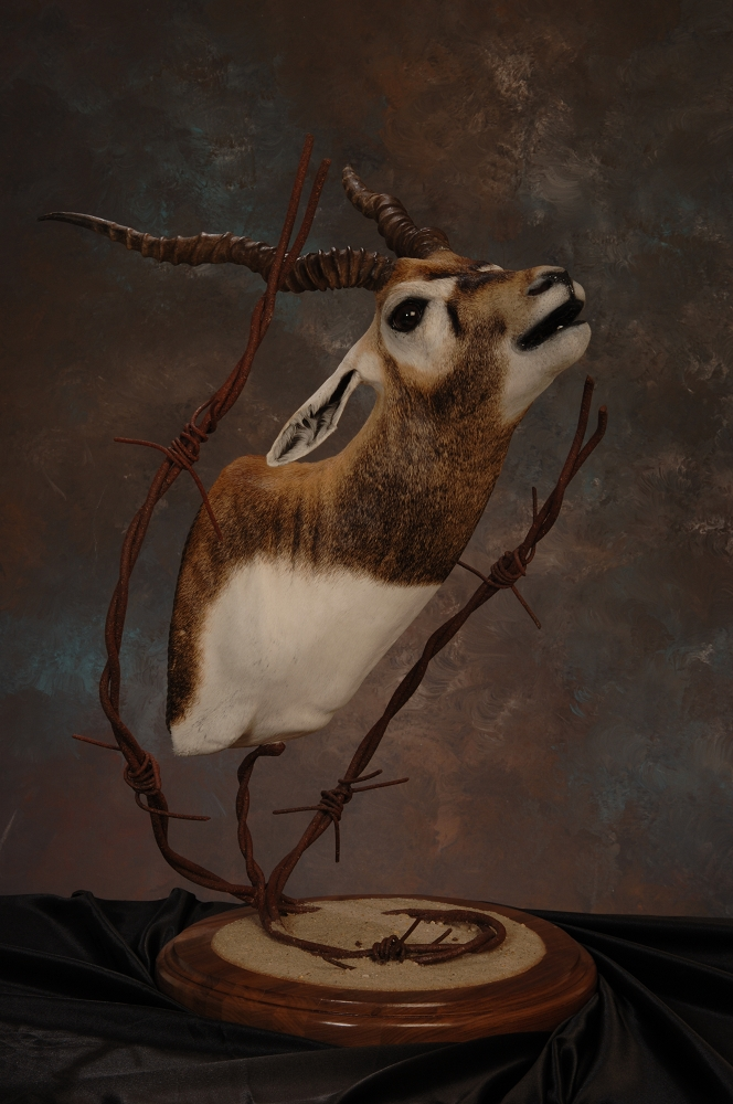 Joe Strange Taxidermy La Taxidermist Louisiana Taxidermy